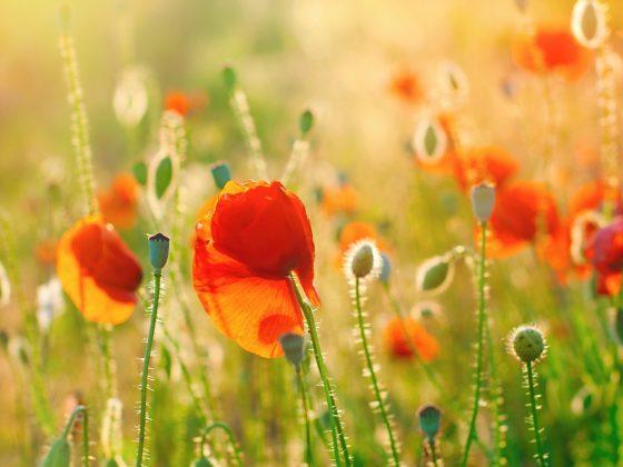 Manifesting Midsummer Mindfulness